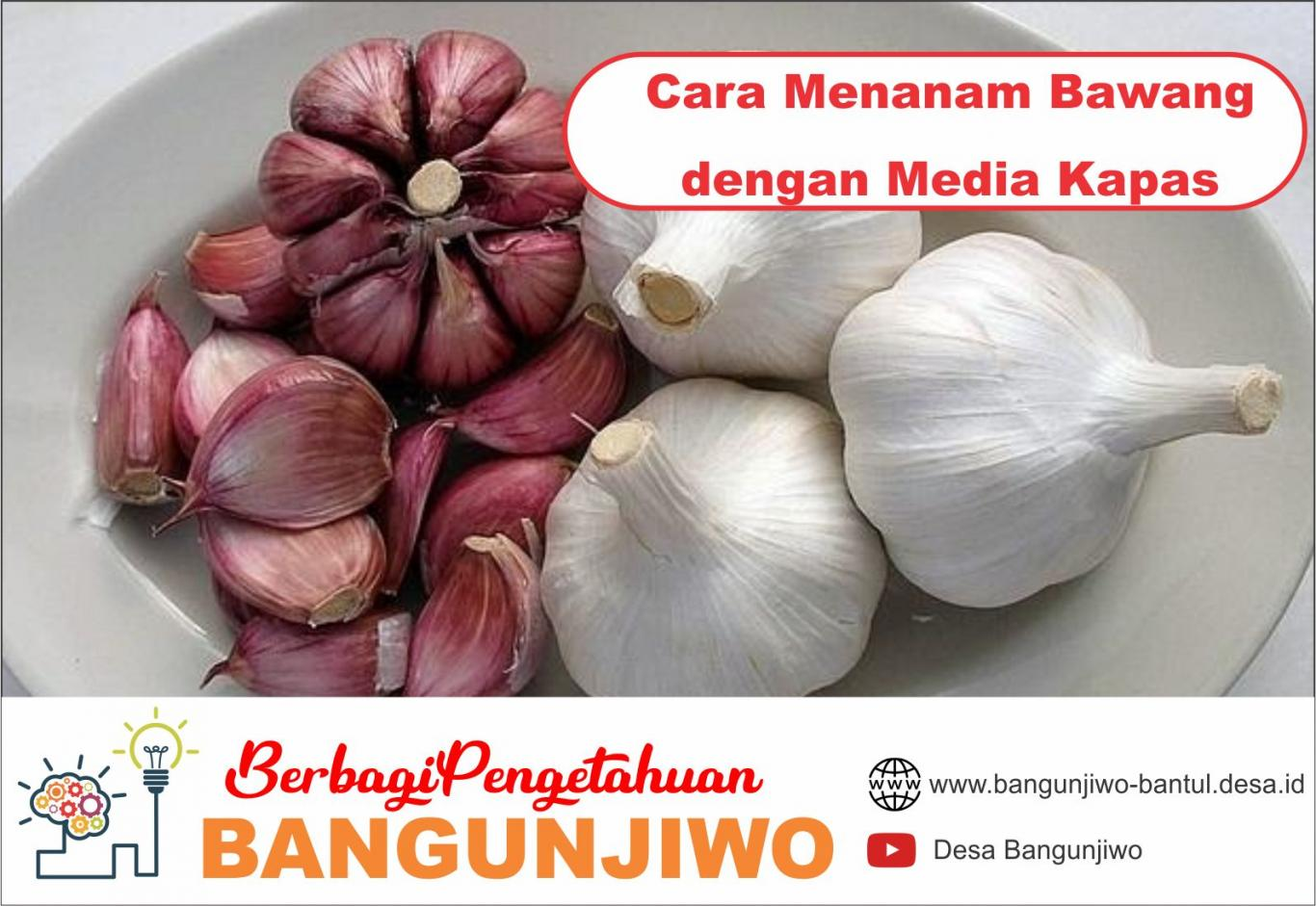 Image Result For Cara Menanam Bunga