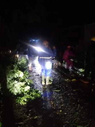 FPRB SIGAP Bangunjiwo mengkondisikan beberapa pohon tumbang di Bangunjiwo