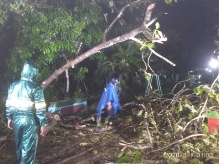 Pohon tumbang, FPRB Bangunjiwo himbau masyarakat waspada saat hujan deras